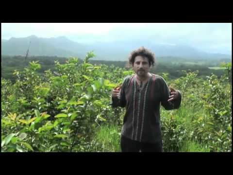 David Wolfe On Asking The Right Questions