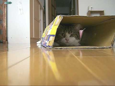 Maru Alides Into The Box