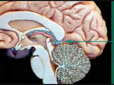 Pineal Gland Awareness and Awakening Third Eye