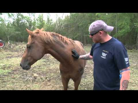 Rescuing Animals After Hurricane Irene