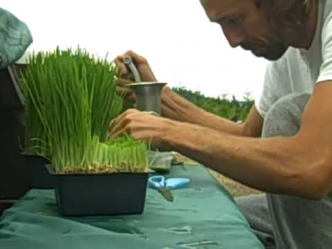 liferegenerator Dan: How To Make Wheat Grass Juice