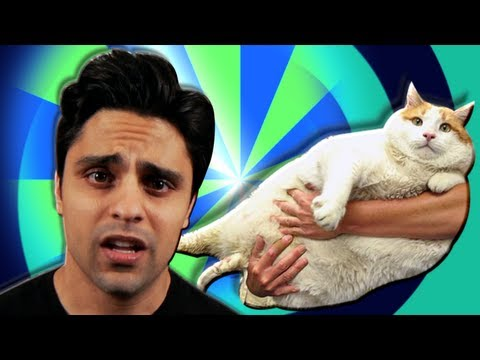 Ray William Johnson =3: MEOW DIED